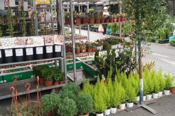 ตลาดต้นไม้ สวนจตุจักร