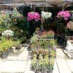 Tree-market-Garden